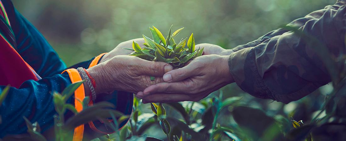 ¿Por qué nuestros productos son orgánicos?